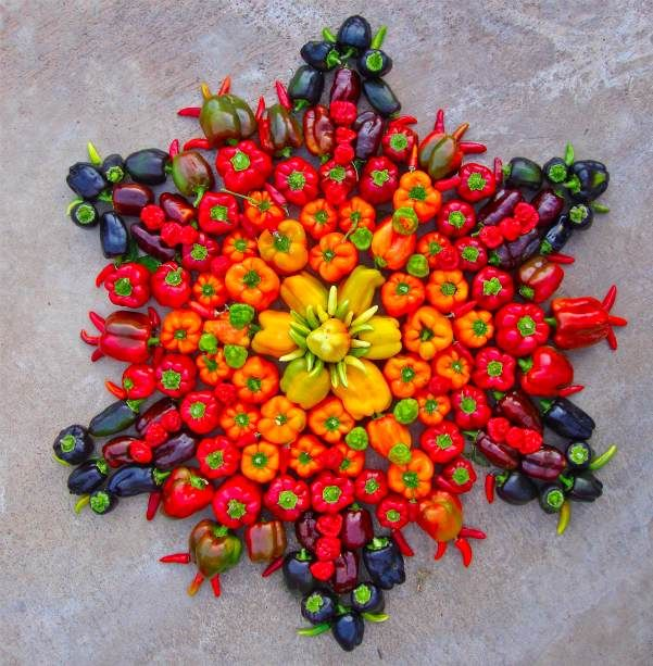 Flower mandalas arrangements by Artist Kathy Klein.