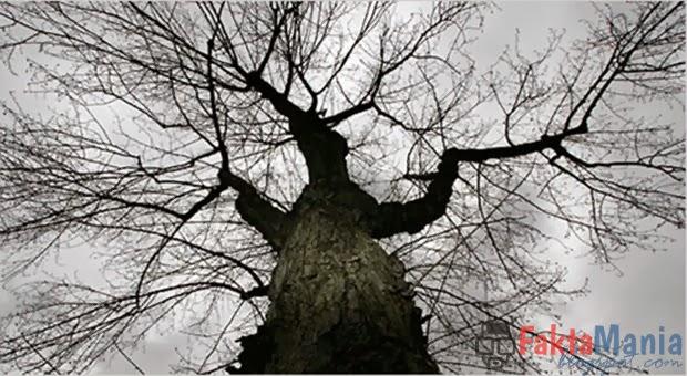 7 Pohon Tempat Tinggal Favorit Para Hantu