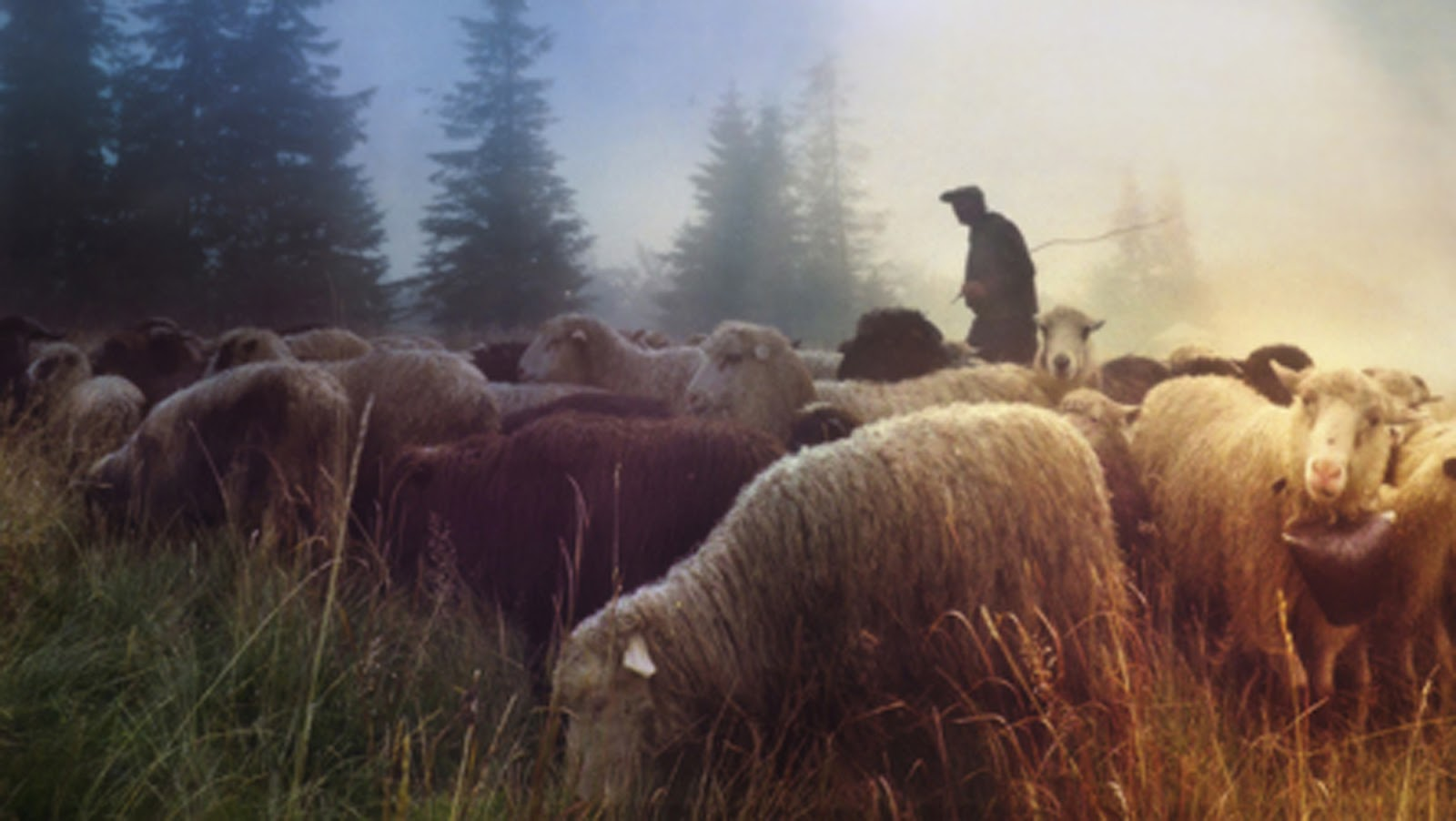 christ as the good shepherd essay Questions and answers on the eucharist dear brothers and sisters in the lord, the beginning of the new millenium challenges us to open wide our hearts to christ.