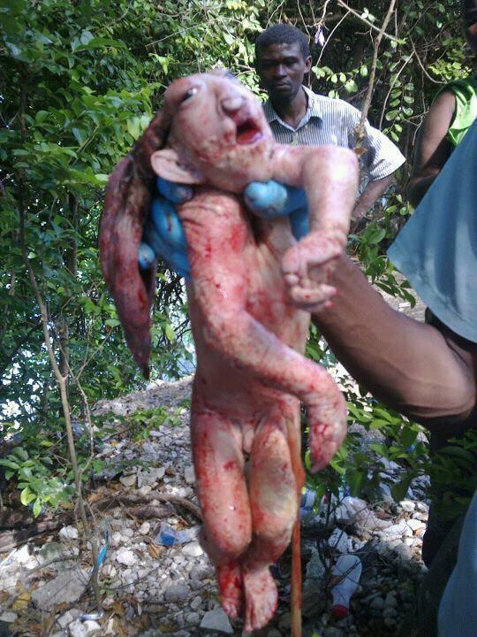 Extraña criatura crea panico en Haiti