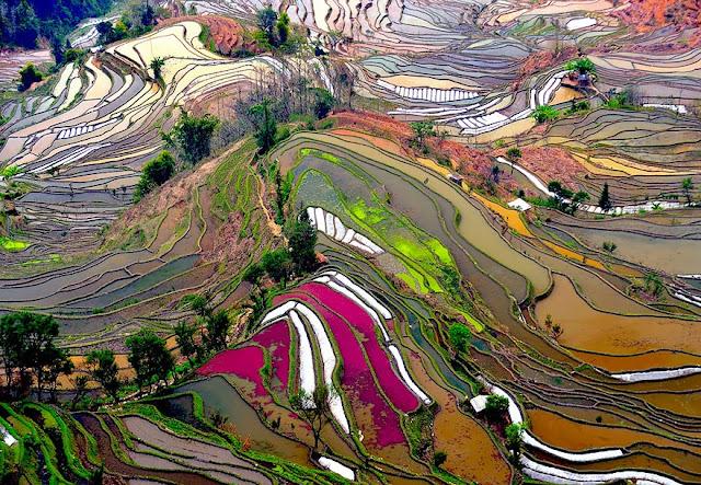 Террасы рисовых полей в Китае