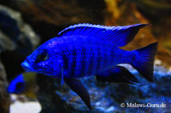 TROPICAL FISH CARE LINKS: