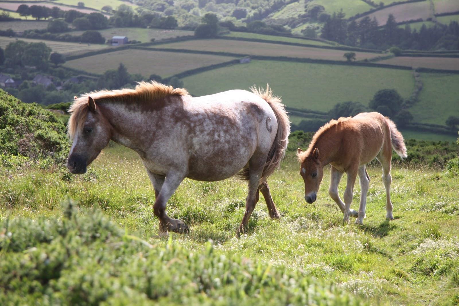 http://1.bp.blogspot.com/-7u_d7DFE9Yg/Tnh2j18HnrI/AAAAAAAAAL0/QuKdD1JZ1yI/s1600/white+wild+horses+%252810%2529.jpg