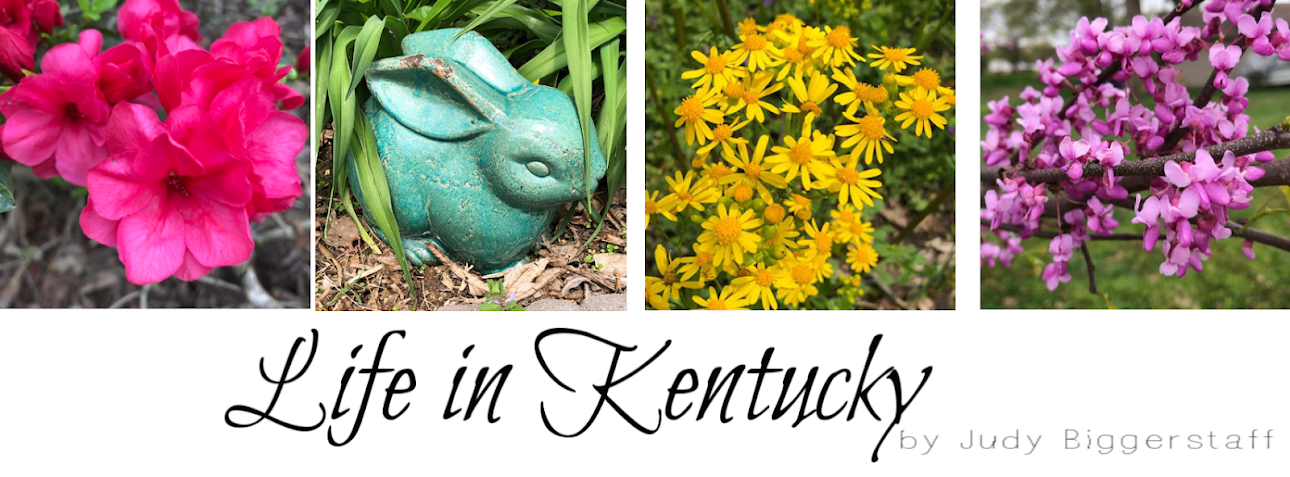 JBigg: Life in Kentucky