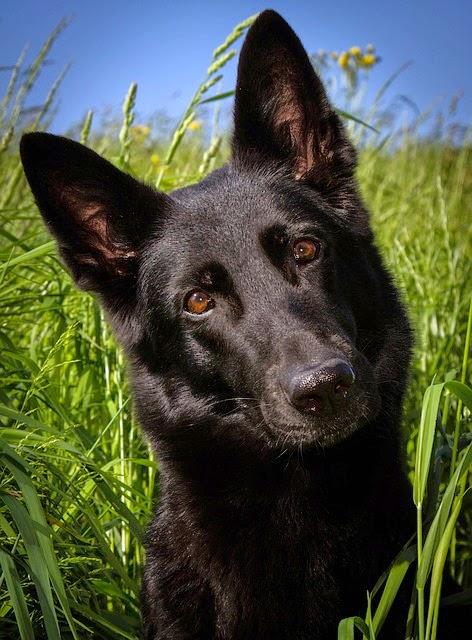 Kawartha Lakes Dog asks What? a thief stole from My Humane Society Pals?