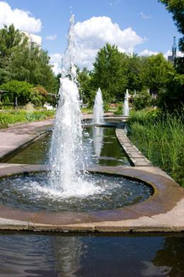 Koi Pond Fountain Koi Fish Care Info