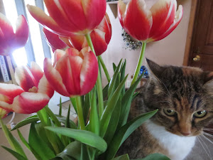 lily and the tulips