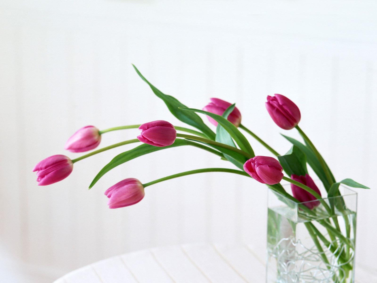 http://1.bp.blogspot.com/-7wNefzpQF44/T9alDCkg7ZI/AAAAAAAAHu0/XczQWBOOwJ4/s1600/flower%2Bbackground%2B04.jpg