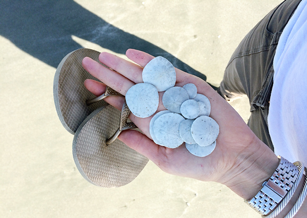 Finding sand dollars in Big Sur at Sand Dollar Beach