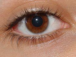Mitos Yang Salah Seputar Mata