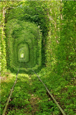 Train Tree Tunnel, Ukraine