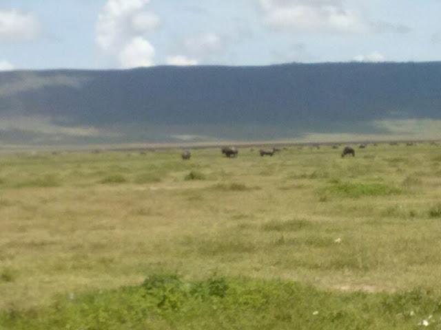 Ngorongoro crater Rhino