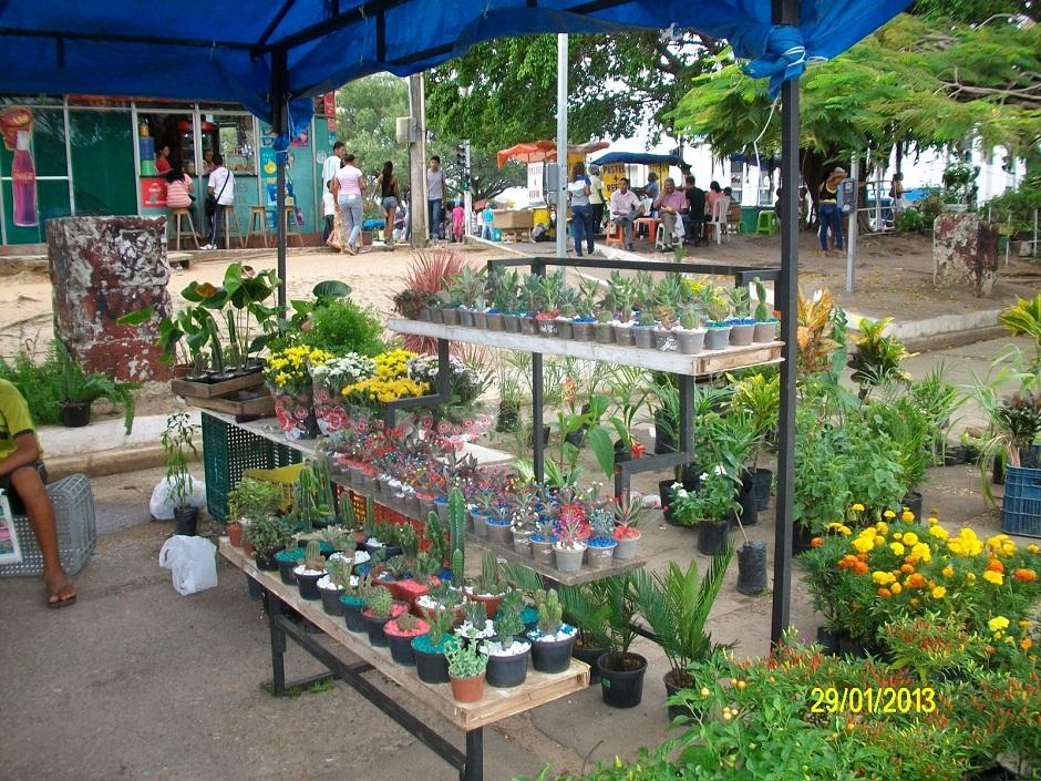 plantas jardim nordeste:Começa a feira de flores tropicais e plantas ornamentais na praça