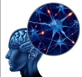 http://www.elcolombiano.com/BancoConocimiento/P/principes_en_neurociencia/principes_en_neurociencia.asp