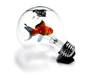 Bulb Aquarium Golden Fish HD Wallpaper