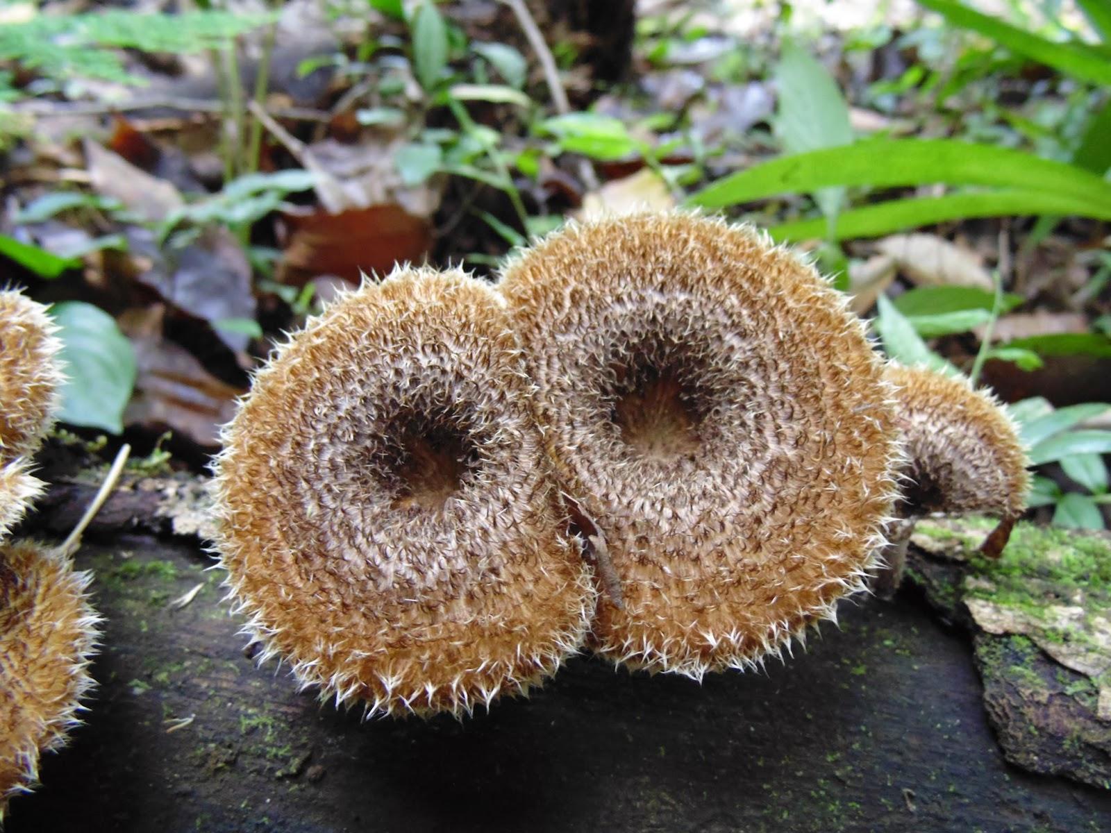 Do que processar um fungo em um prego