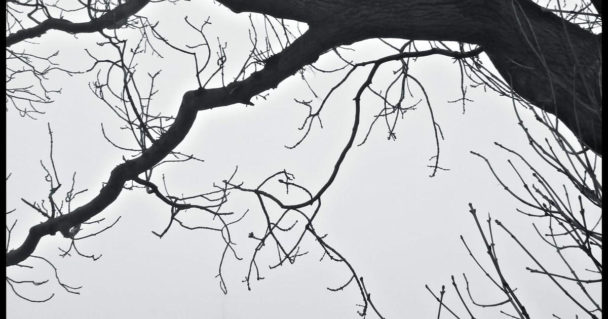 A trav s de m el rbol que no ten a hojas for El arbol que no tiene hojas