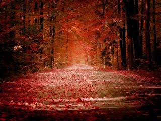 life is poem