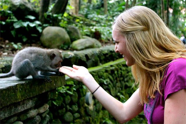 monkey sanctuary ubud bali