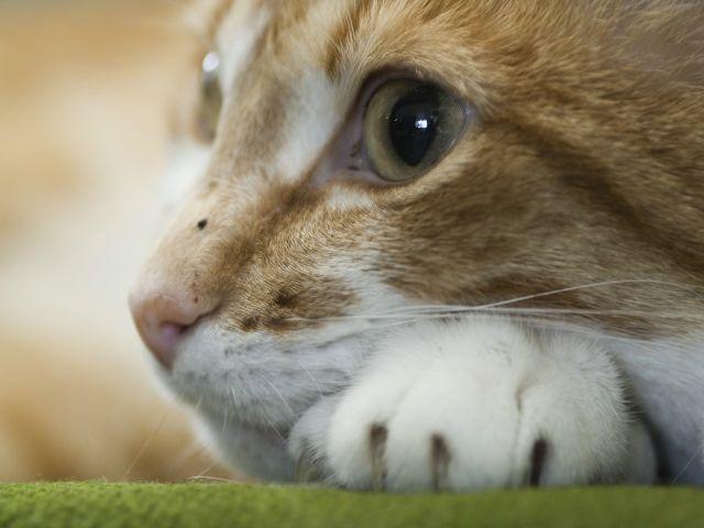 Cute animal videos facebook