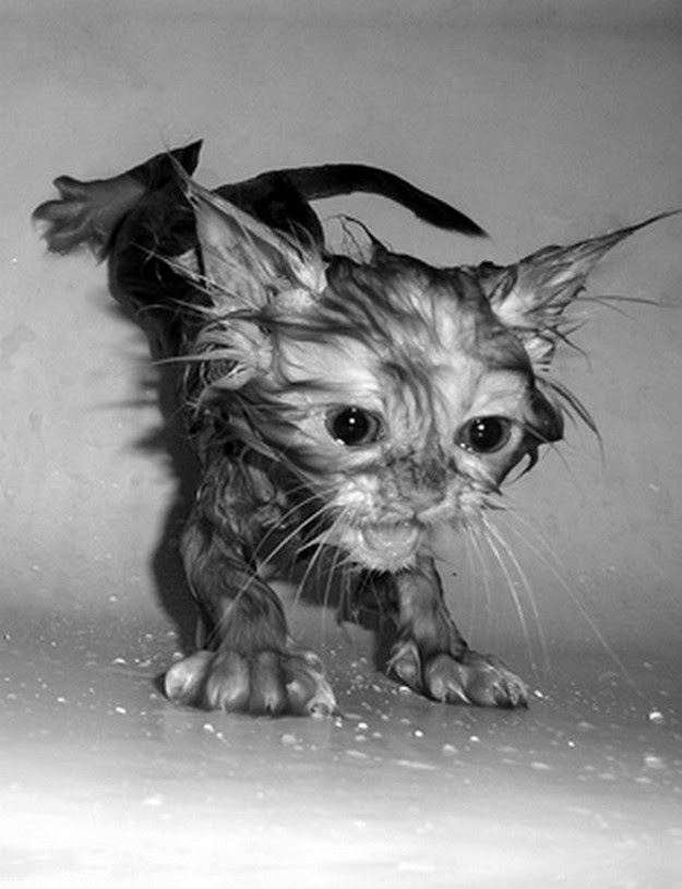 wet cats after bathing
