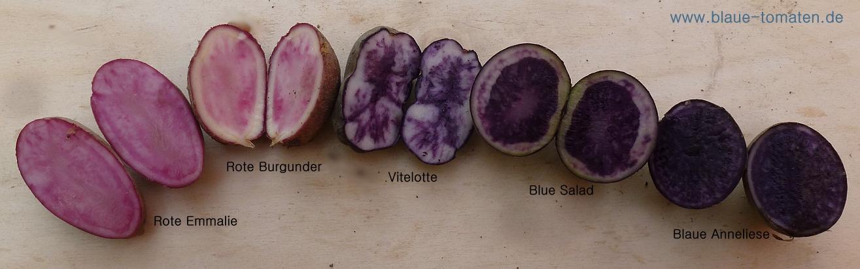 Rezepte violette kartoffeln