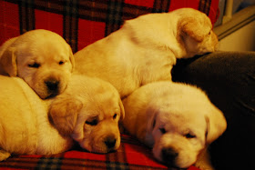 Kristi's Winter Litter 2012-2013
