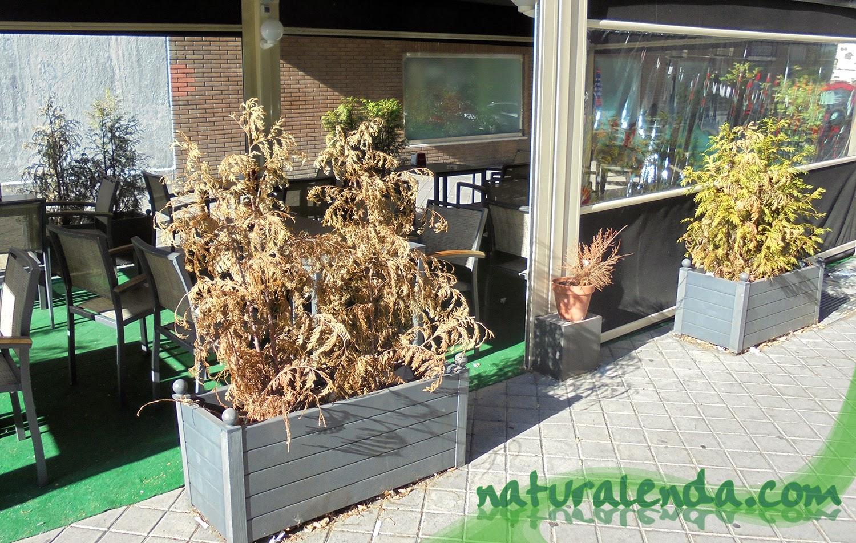 terraza con plantas secas