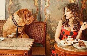Restauracje i kawiarnie przyjazne psom
