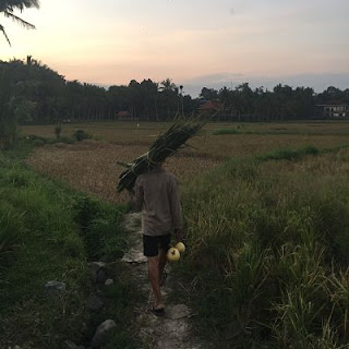 Badulu Village. Bali. Arrozales. IBMF