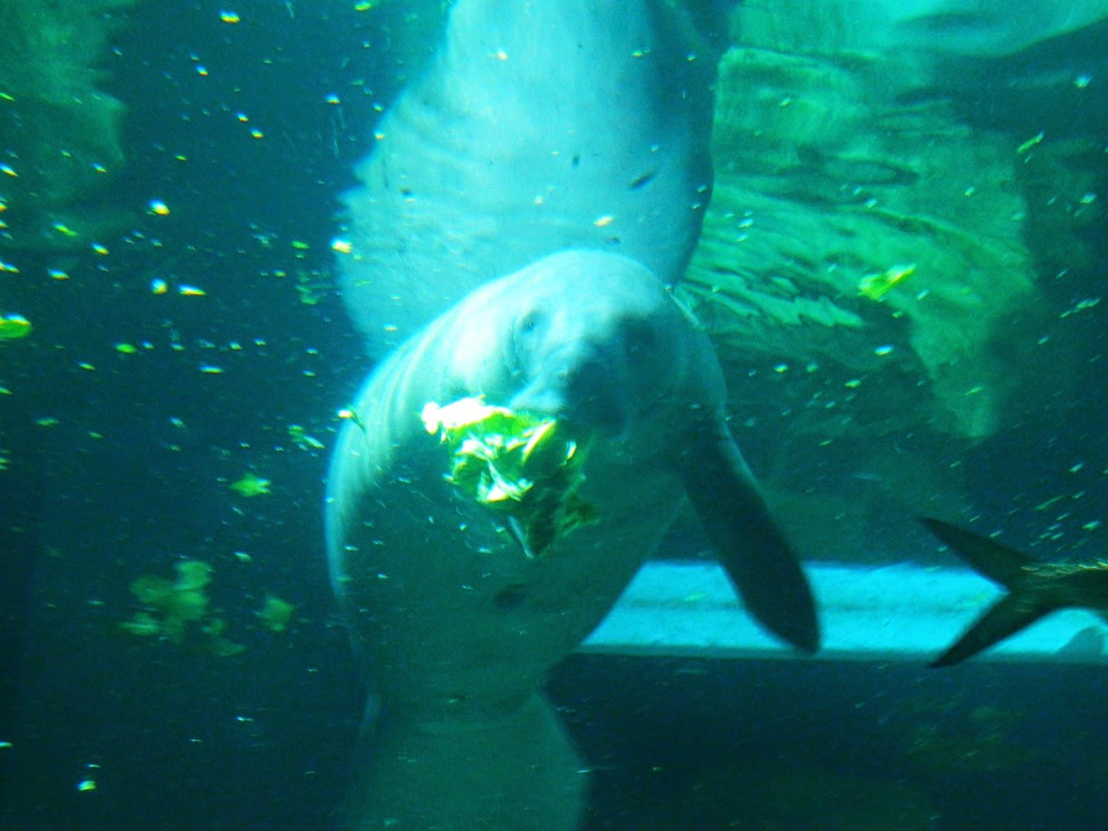 nemo aquarium disney world manatee