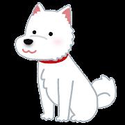 北海道犬のイラスト