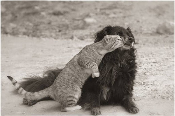 Dog and Cat Funny Kissing Photo