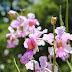 An Extraordinary Orchid Garden