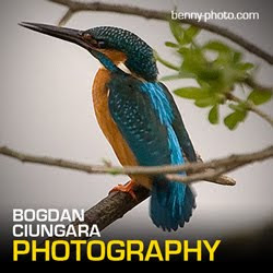 Bogdan Ciungara Photography