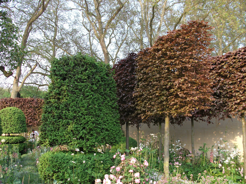 Copper Beech Hedge The Plants Were Grown By Online Garden Centre Crocus And Included Papaver Somniferum Sweet Rocket Persicaria Bistorta