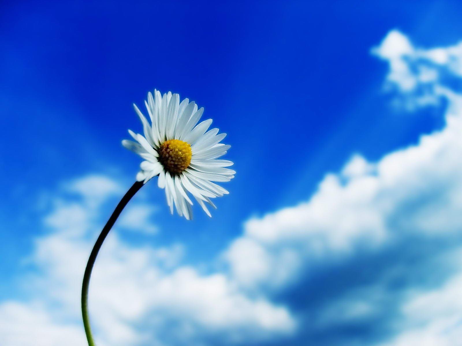 http://1.bp.blogspot.com/-8-IWsi_a-PQ/T4mUTgneagI/AAAAAAAAHs0/V5pHKNkkp6U/s1600/Nature+Wallpaper+0091.jpg