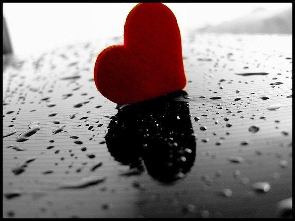 Mi jardin de poemas luci rnaga el amor for Amor en el jardin