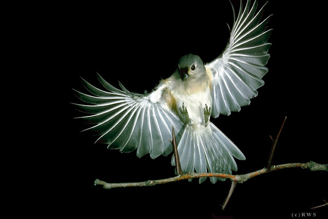 நான் பார்த்து ரசித்த புகைப்படங்கள் சில.... Flying+Birds+%25281%2529