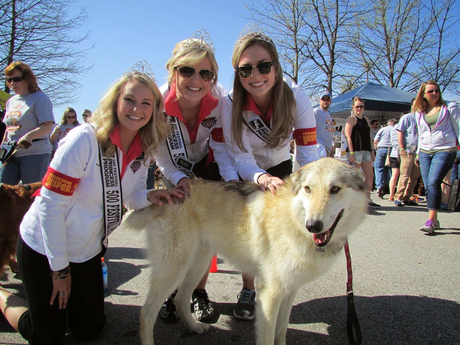 500 festival princesses with wolfdog