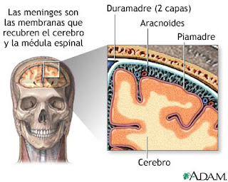 meninges medula espinal