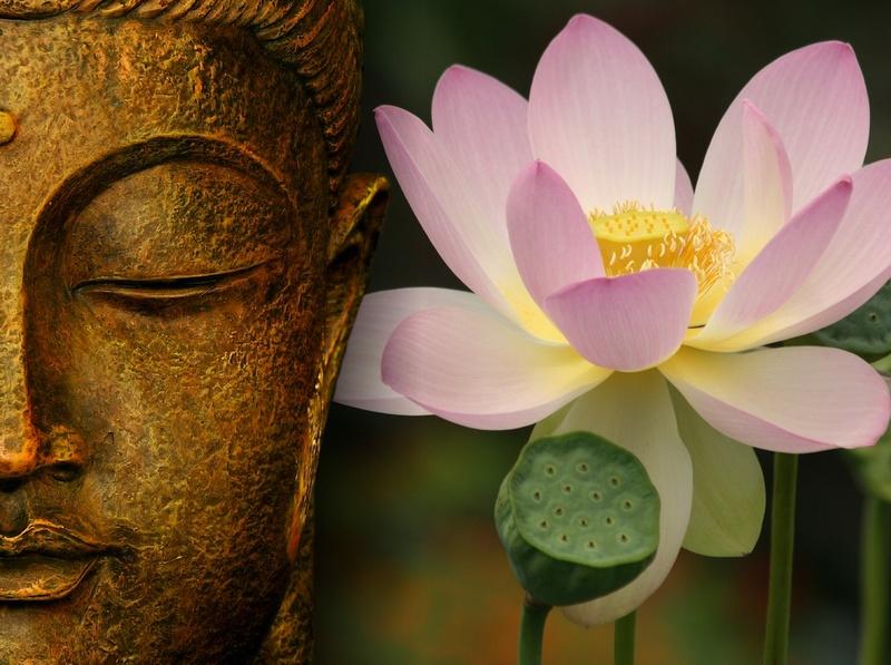 Voie veill e du coeur la fleur de lotus symbolique et - Fleur de lotus bouddhisme ...