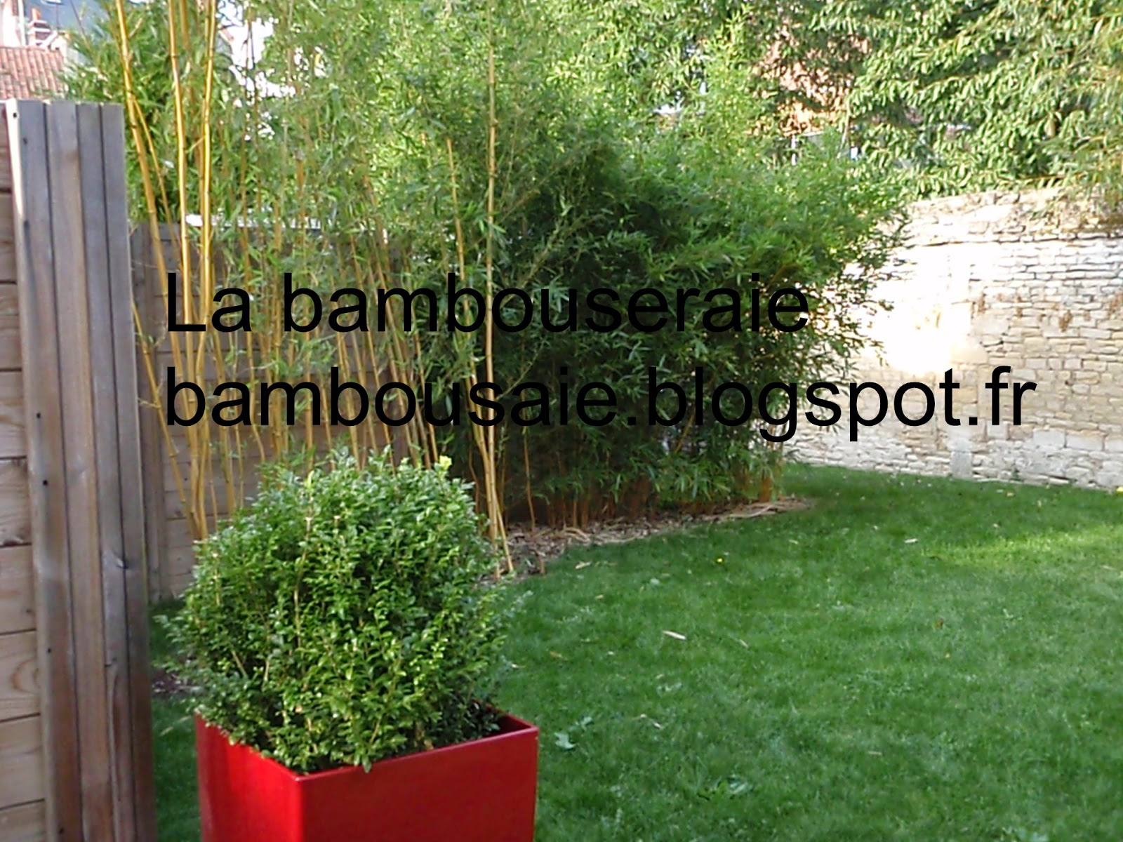 La bambouseraie bambou illustration et photo for Bambou haie de jardin