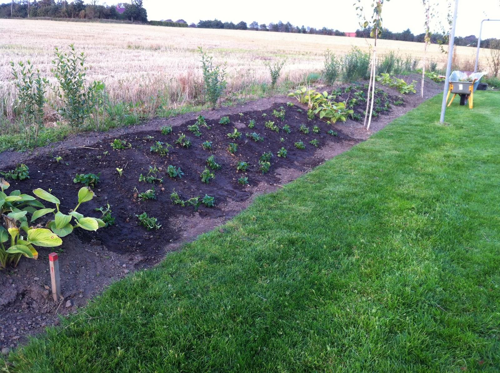 vintergrønne planter til skråning