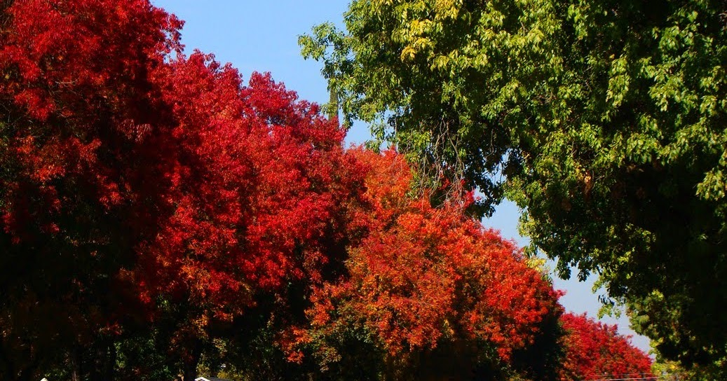 Comment faire arbres poussent plus vite comment fait - Arbre qui pousse vite et fait de l ombre ...