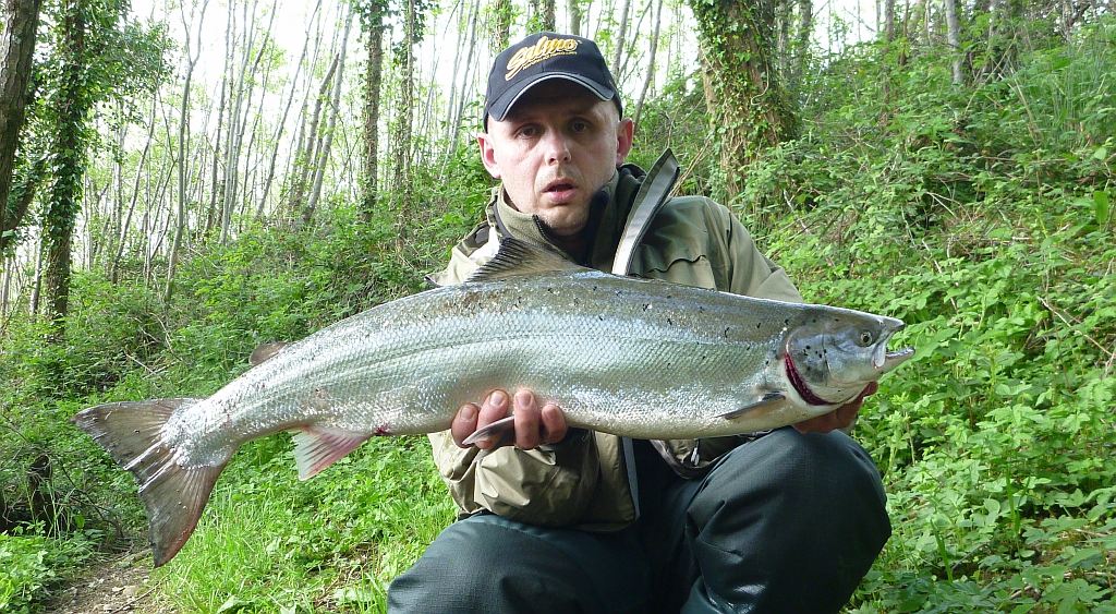 Sea bass hunting nice salmon river laune for Bass fishing season