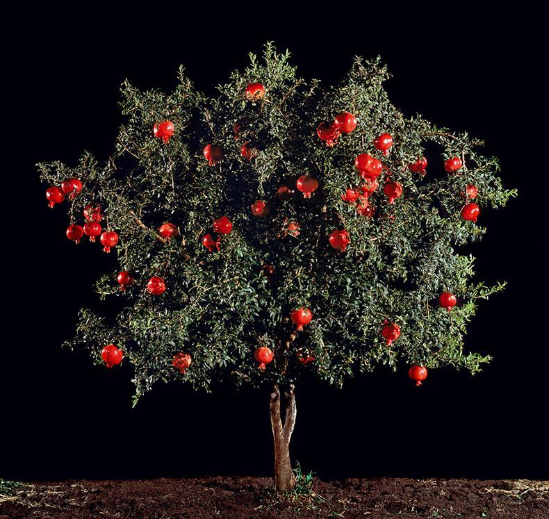 algunos de tus frutas, verduras y especias cultivo
