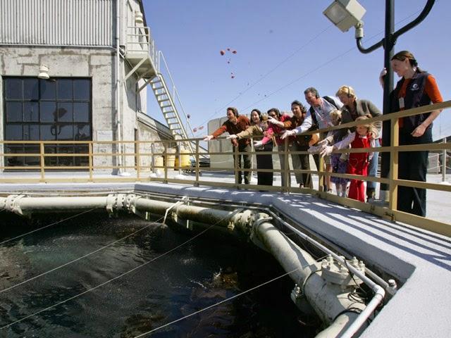Monterey Bay Aquarium, na Califórnia