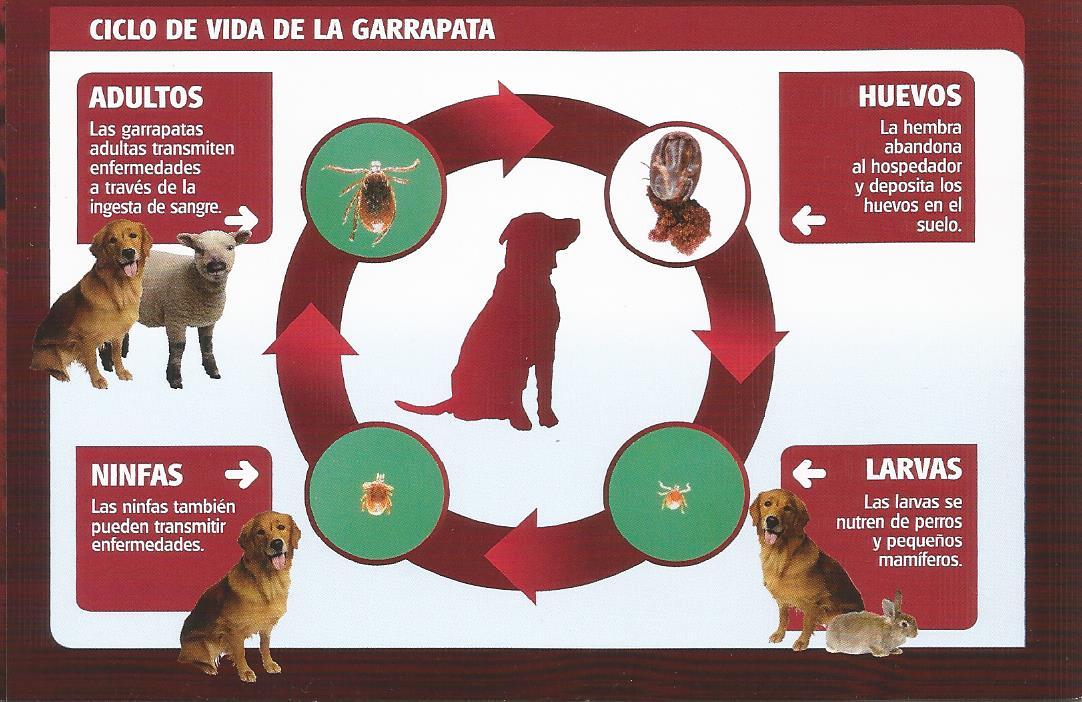 Por Una Manada Feliz Gu 237 A Canina Las Garrapatas