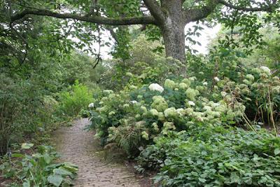 Hidcote Manor Garden Hydrangeas